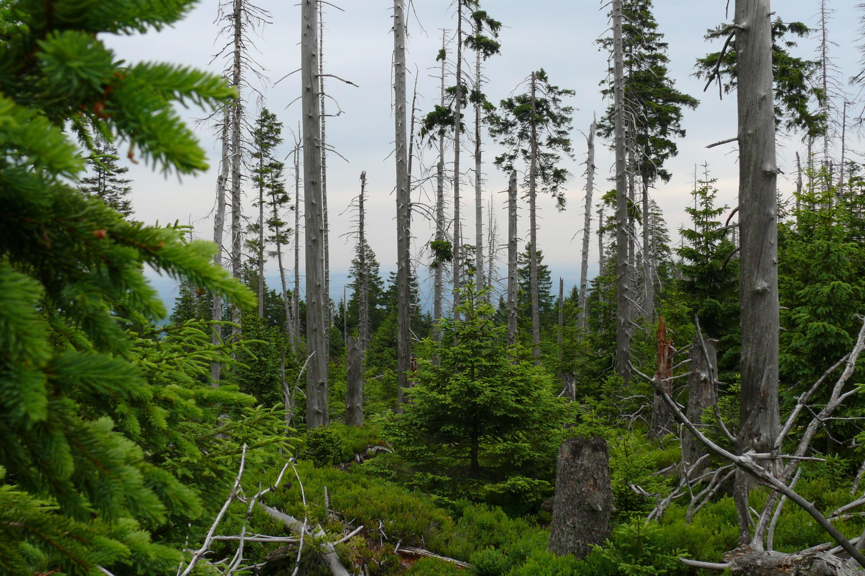 nationalpark harz zwischenbilanz zur naturwald entwicklung. Black Bedroom Furniture Sets. Home Design Ideas